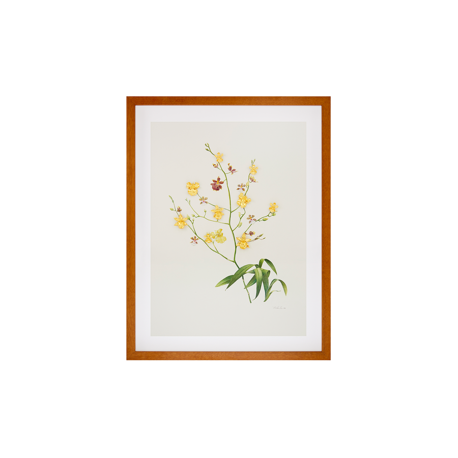RISIS X Lucinda Law Botanical Watercolour Painting Series