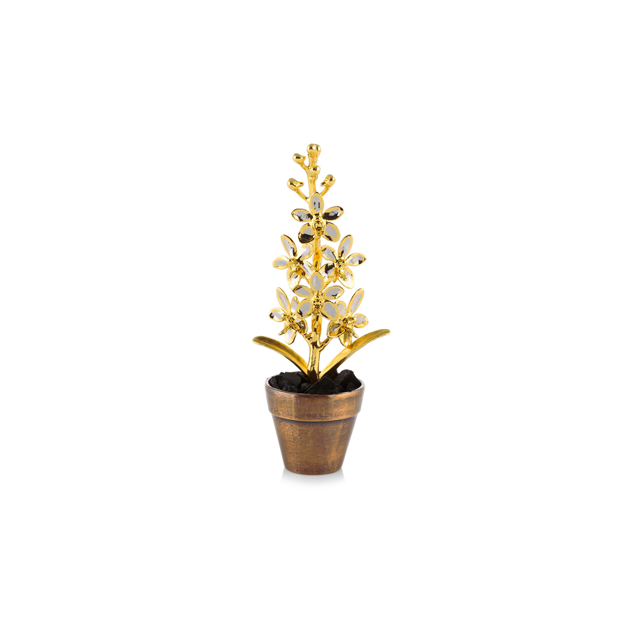Aeridovanda Vieng Ping Orchid Spray In Miniature Pot