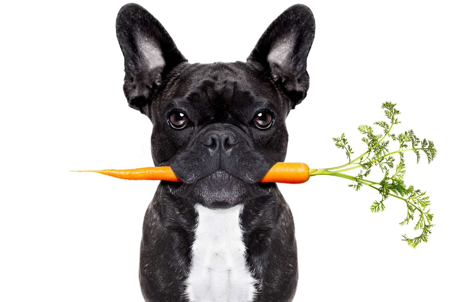 Dog raw food diet
