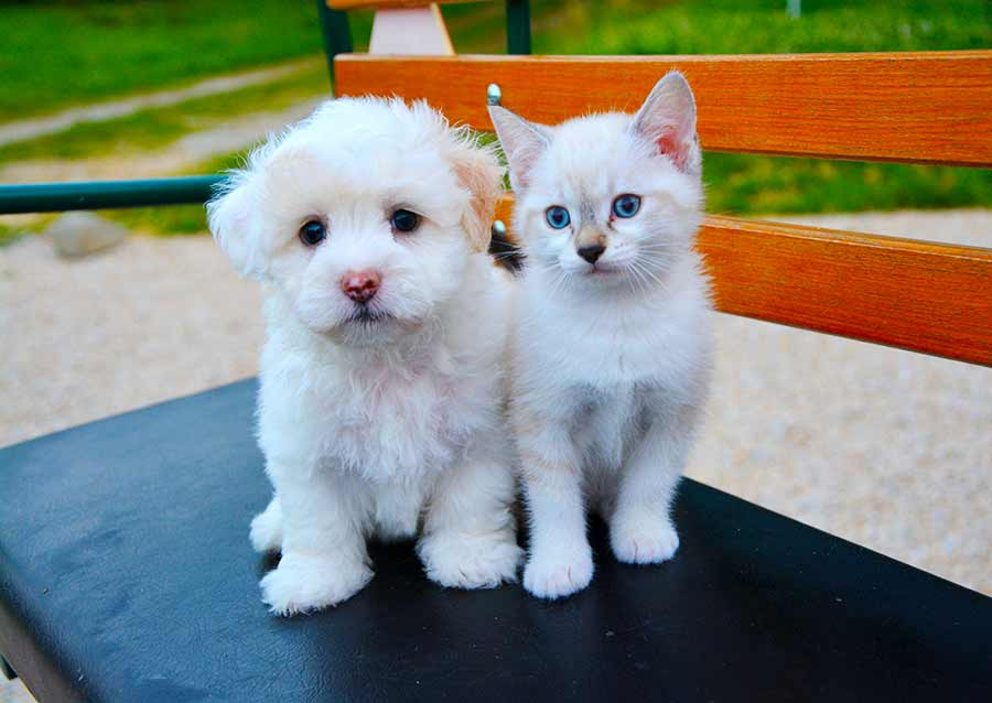 Puppy and kitten sitting next to each other on a bench