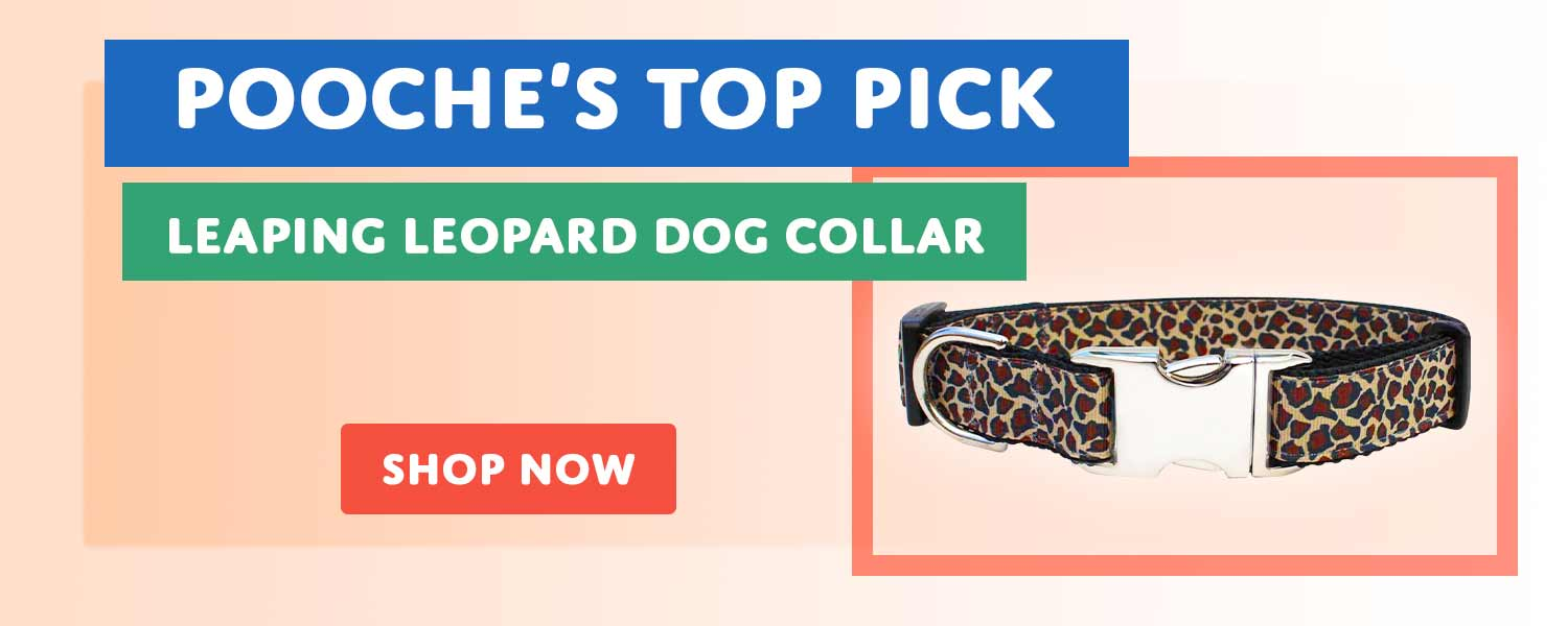 Top Pick - Leaping Leopard Dog Collar