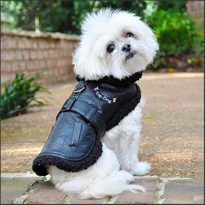 Leather Dog Coat Harness and Leash Set - pooche supplies