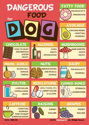 Poster showing all the foodstuffs that can be dangerous for your dog.