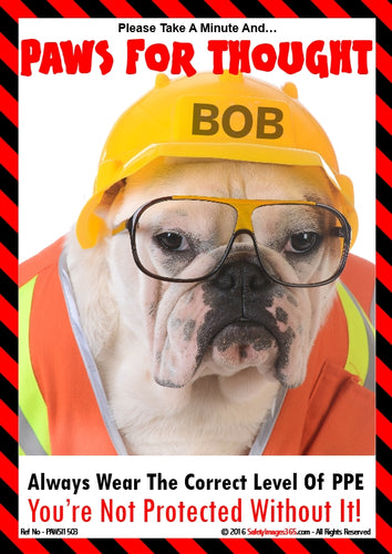 Picture of a dog wearing a hard hat, safety goggles and a hi-visibility coat.