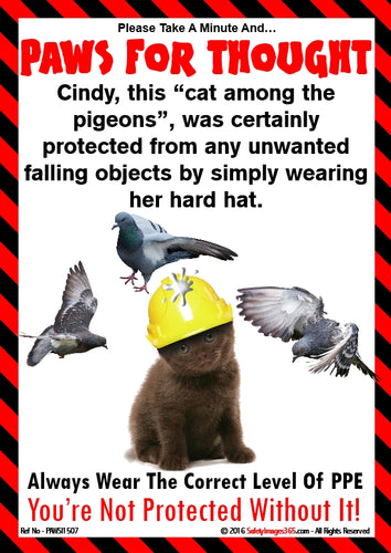 A picture of a cat wearing a safety helmet with birds flapping around its head.