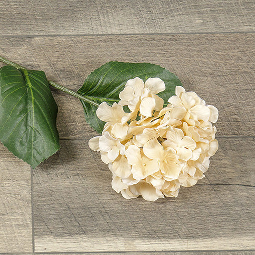 Beige Hydrangea Stem-Seasonal-A Cottage in the City