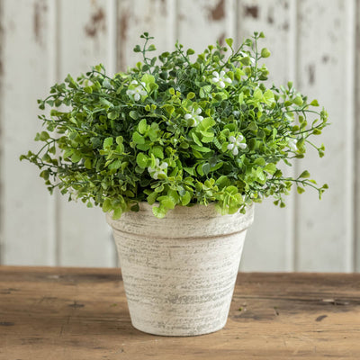 Potted White Flowering Greens