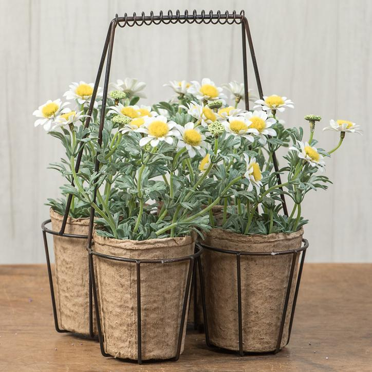Daisies In Wire Basket