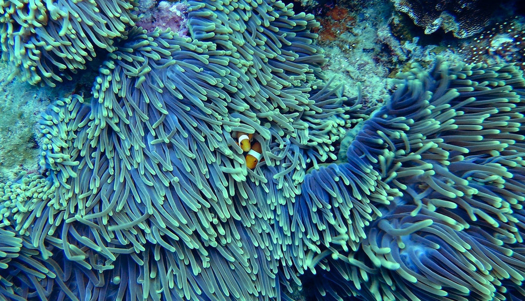 Coral reefs in danger: 8 tips on how you can help protect coral reefs in everyday life