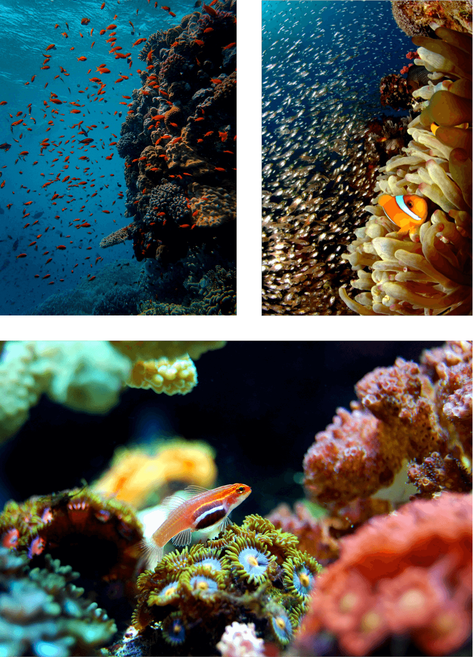 coral-reef-foundation-merowings-collage