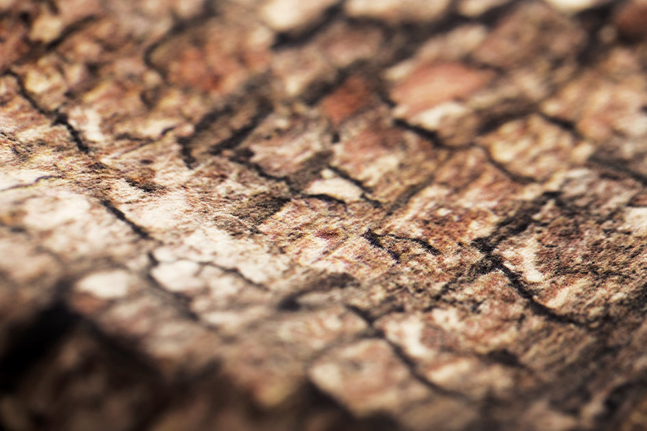 Closeup of one of MeroWings' photo-realistic tree prints