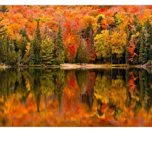 Load image into Gallery viewer, Autumn is coming