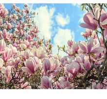 Load image into Gallery viewer, Magnolia - Just Paint By Numbers
