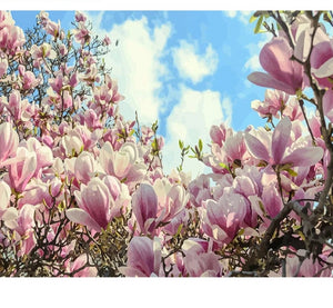Magnolia - Just Paint By Numbers