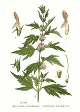 Load image into Gallery viewer, Motherwort Herbal Tincture