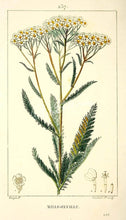 Load image into Gallery viewer, Yarrow Tincture