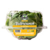Buttercrunch Living Lettuce