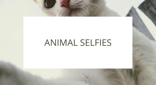 Should we be taking selfies with animals?