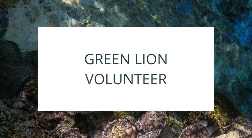 Volunteering at Green Lion in Indonesia