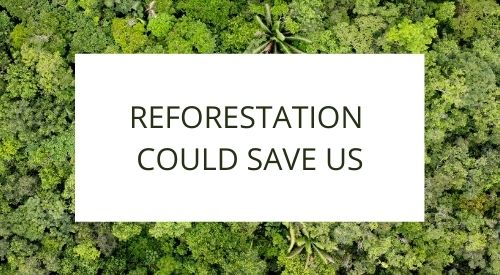Reforestation could save the human race