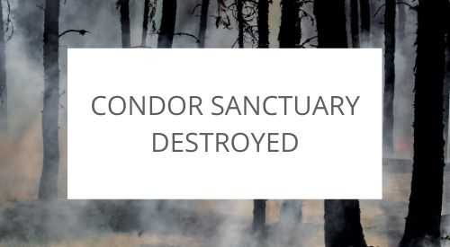 Condor sanctuary destroyed during California's wildfires