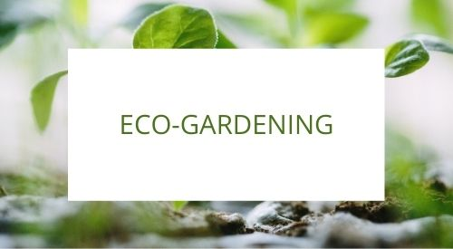 How to plan an eco-friendly garden or terrace