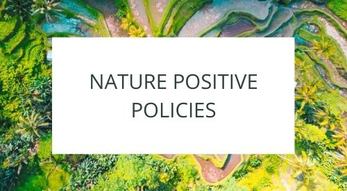 What are nature positive policies from an economic point of view?
