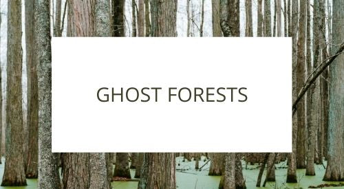 Ghost forests, not a new phenomenon but moving inland