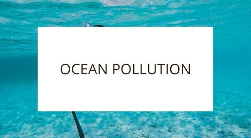 Do you think plastic straws are the worst polluters of our Oceans?
