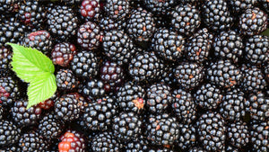 Wild Blackberry Fruits