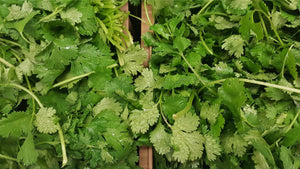 coriander (Coriandrum sativum) cilantro leaves