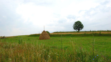 Landscape of Transylvania Romania hay stack on green field