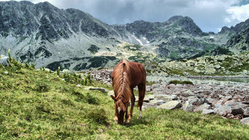 Horse eating grass on Retezat mountains peak in Transylvania Romania