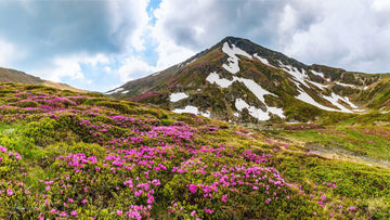 Amazing Transylvania mountains and wild flowers