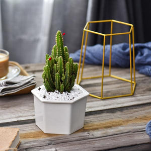 Hexagon Stand & Planter - HomelyHome [Free Shipping]
