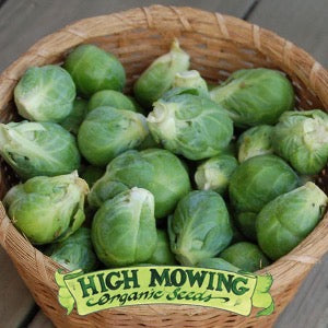 "Brussels Sprouts ""Nautic F1"""