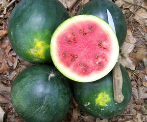 "Watermelon ""Blacktail Mountain"""