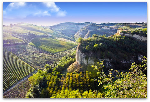 le marche wine region
