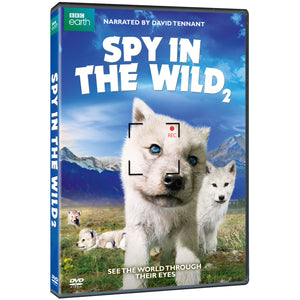 Spy in the Wild: Part 2