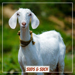 All Natural Goats Milk Lotion - The Goat's Field