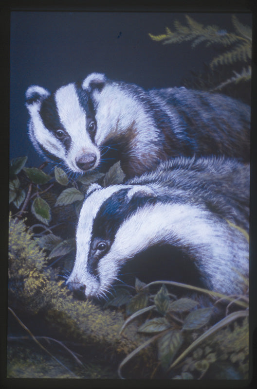 Image for article BROCK THE BADGER