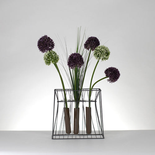 Optic Alliums