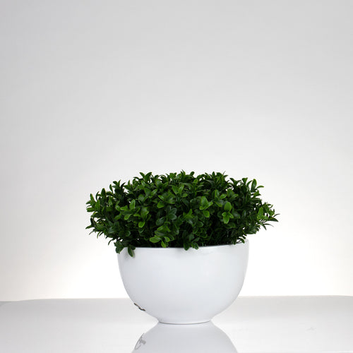 Boxwood Pot