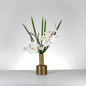 Jara Orchid- White