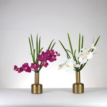 Load image into Gallery viewer, Jara Orchid- White