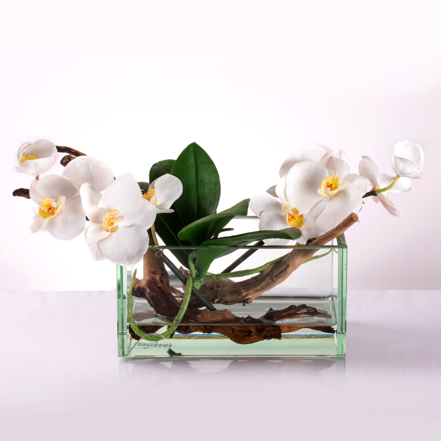 Orchid in Water M