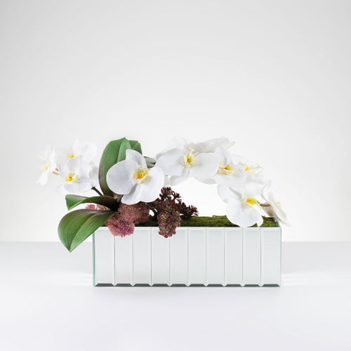 Bevel Orchid- White   Item # 828