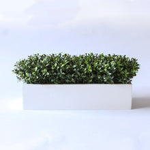 Load image into Gallery viewer, English Boxwood   Item #833