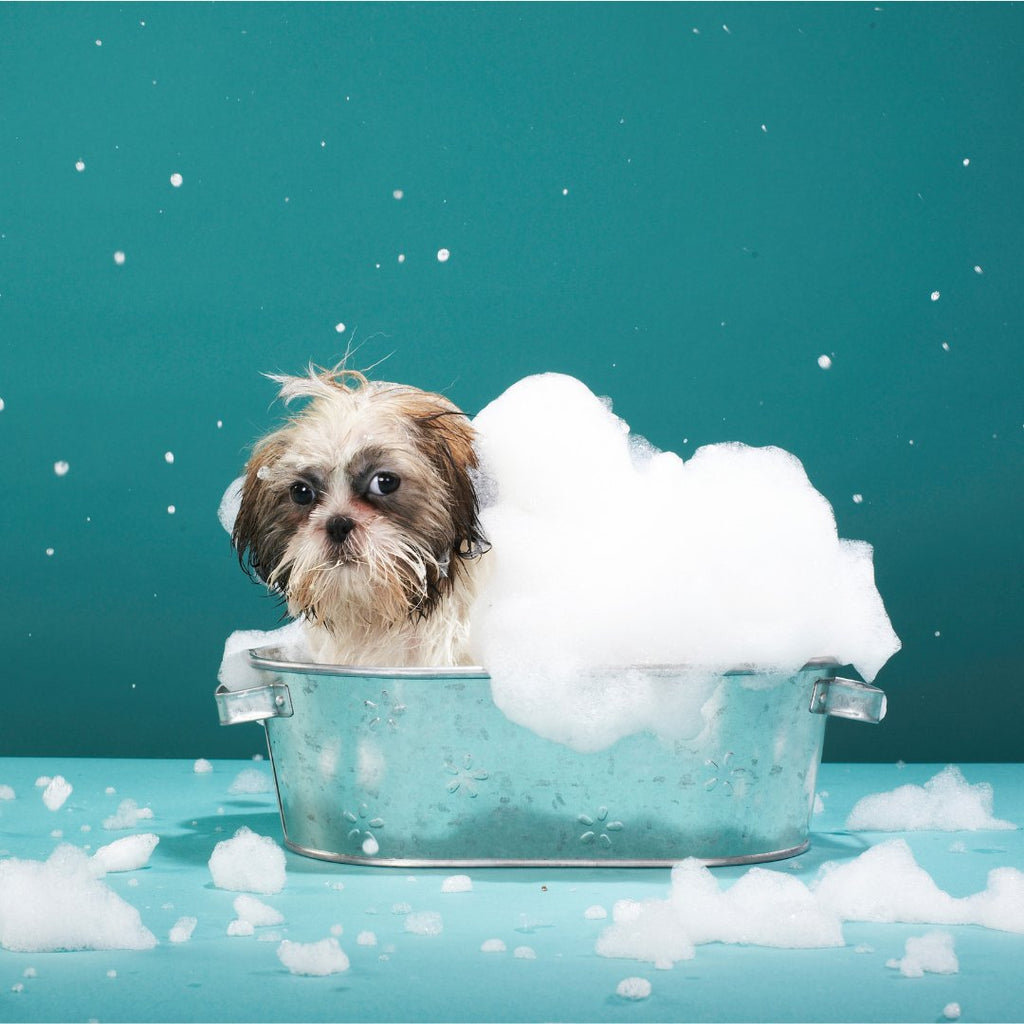 Natural Nordic dog care, fur and skin care with the help of Mother Nature!