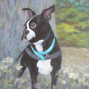 "Boston Terrier Dog Painting 12x12 Acrylic on Artist Panel ""Very George"""